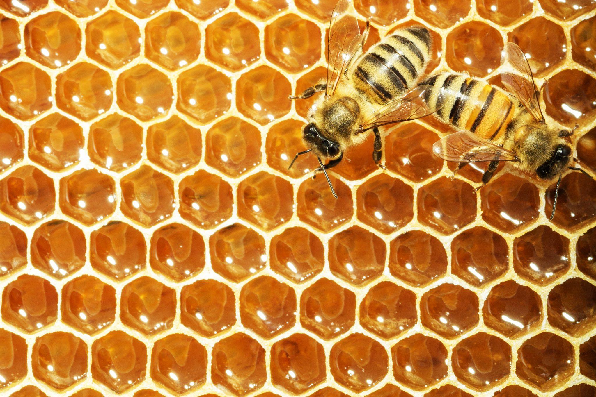 The Queen Bee and Teen Beauty Secrets